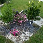 Les amis des fleurs de Saint-Junien